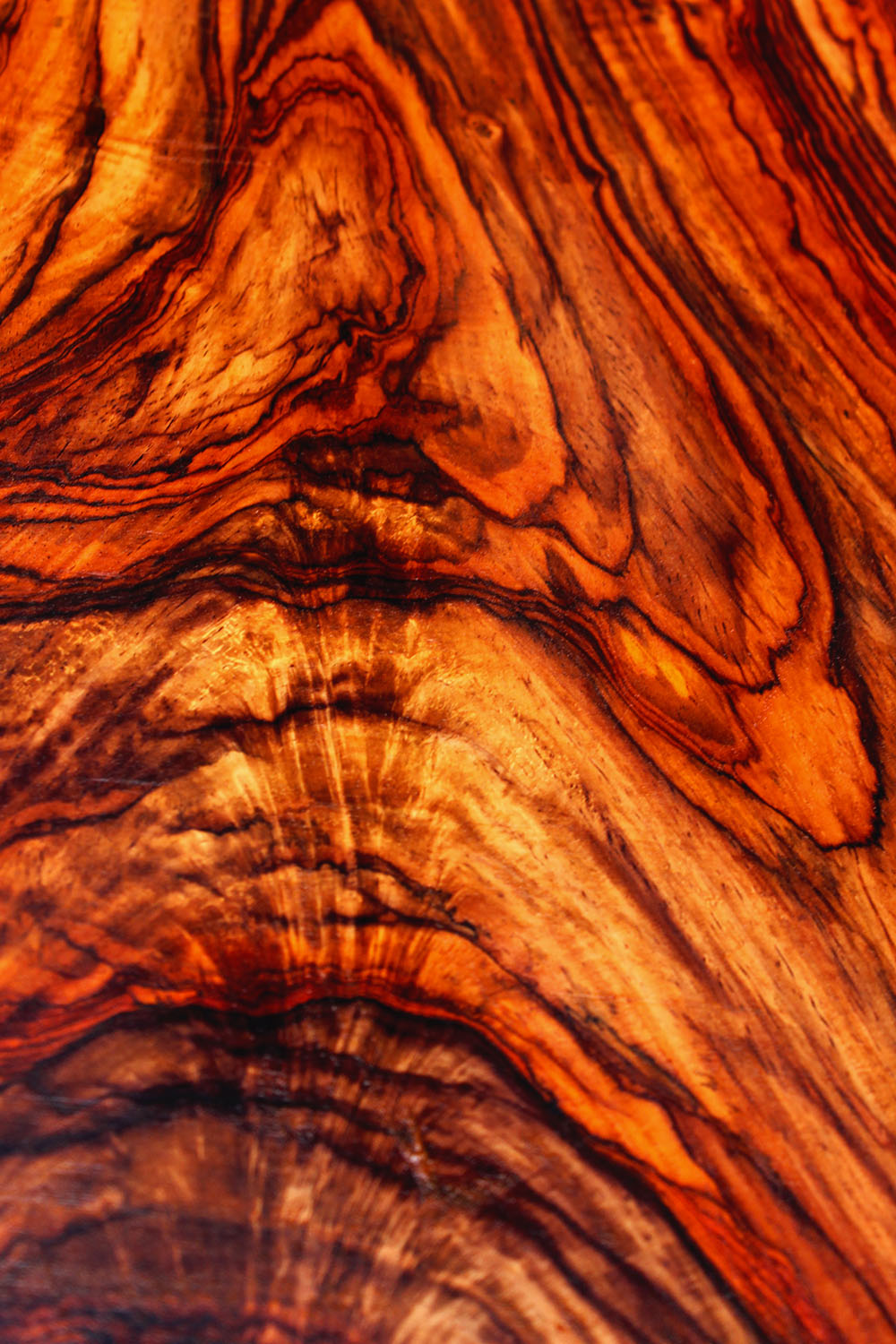 Cocobolo savage woods for The rosewood