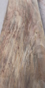 Cocobolo Sapwood Board